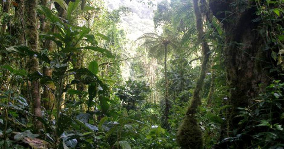 Planting Biodiverse Forests In Panama The Gold Standard